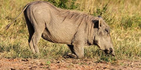 10-Day The Best of Kenya and Tanzania Safari