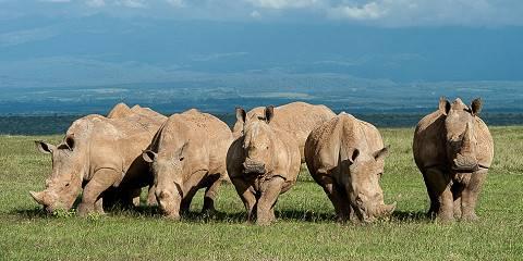 1-Day Lake Nakuru Safari Tour from Nairobi