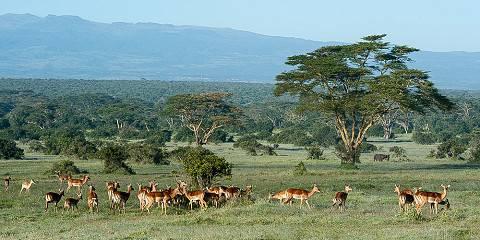 8-Day Classic Kenya Safari