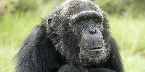10-Day Wildlife Kenya Tour