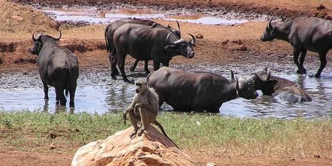 6-Day Buffalo Springs/ Maasai Mara Fly-in Safari