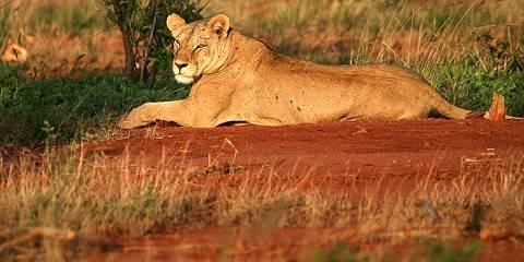 8-Day Kenya and Tanzania Camping Safari Combinations