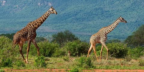 10-Day Mara Naivasha Nakuru Amboseli & Mt Kenya Trekking