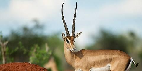 4-Day Karibia Kenya Safari