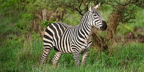 9-Day Tembea Kenya Safari