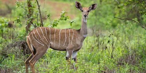 9-Day Samburu-Nakuru-Maasai Mara-Amboseli Wild Safari