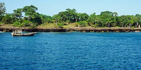 1-Day Wasini, Kisite Mpunguti Island- Dolphin Safari