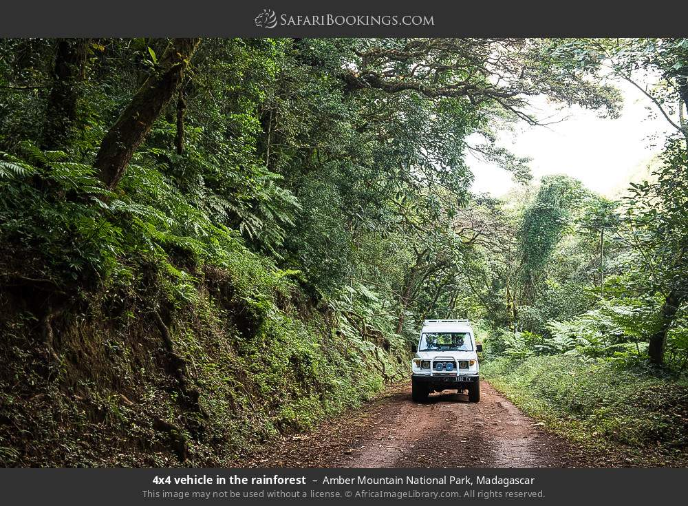 Tourist vehicle in the rainforest in Amber Mountain National Park, Madagascar