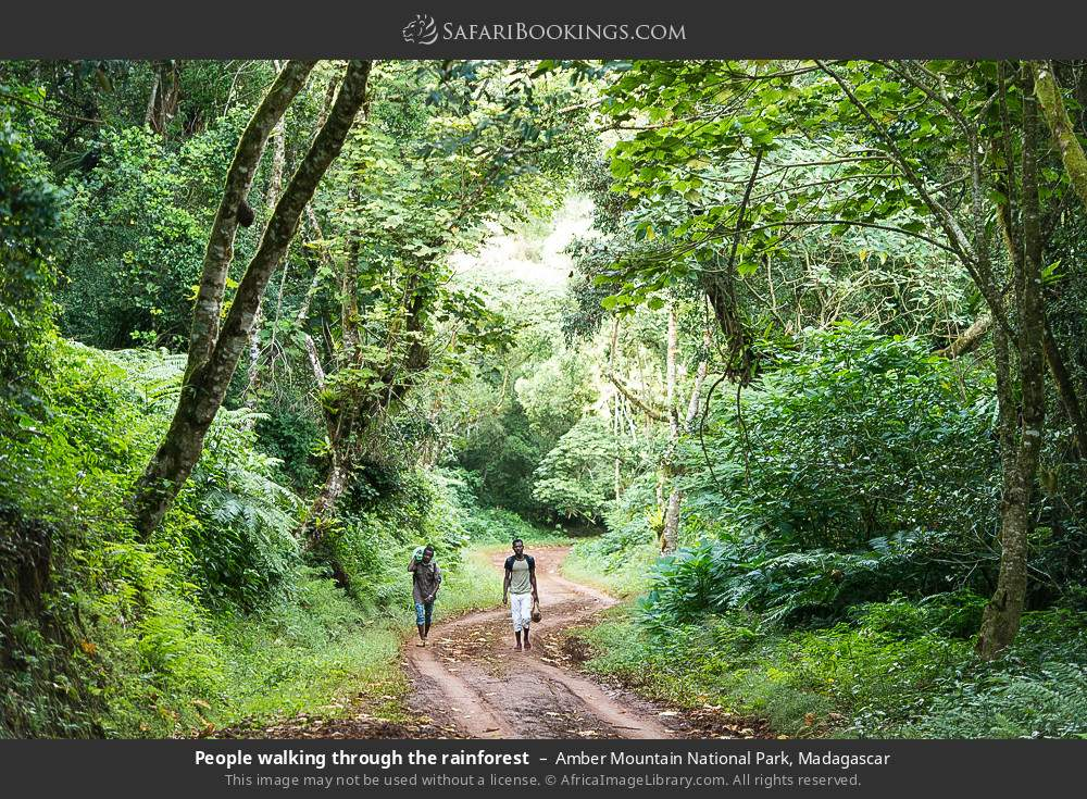 People walking through the rainforest in Amber Mountain National Park, Madagascar