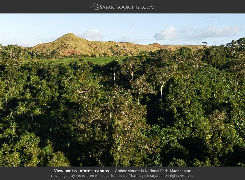 View over rainforest canopy in Amber Mountain National Park, Madagascar