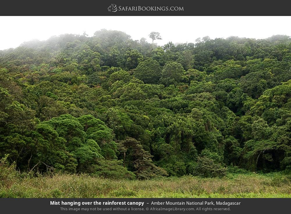 Mist hanging over the rainforest canopy in Amber Mountain National Park, Madagascar