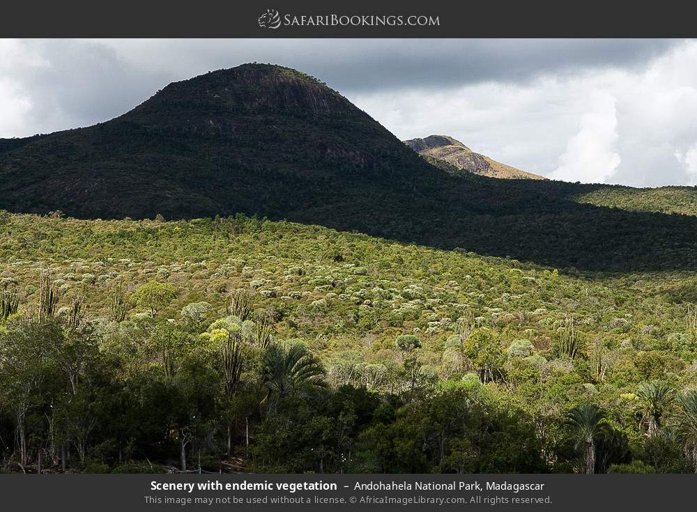Scenery with endemic vegetation in Andohahela National Park, Madagascar