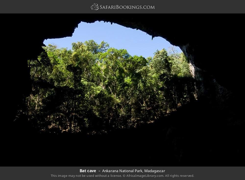 Bat cave in Ankarana National Park, Madagascar
