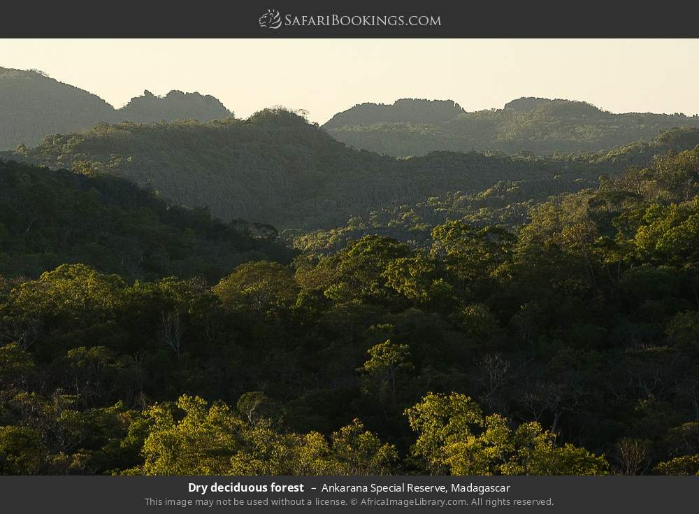 Dry decidious forest in Ankarana Special Reserve, Madagascar