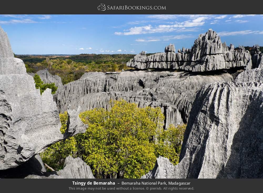 Tsingy de Bemaraha in Bemaraha National Park, Madagascar