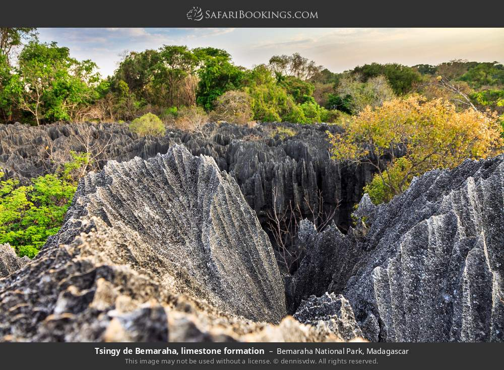 Tsingy de Bemaraha, limestone formation in Bemaraha National Park, Madagascar