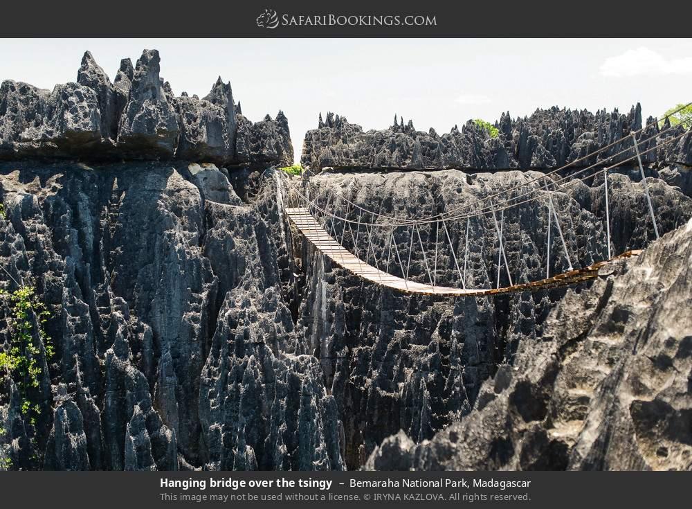 Hanging bridge  over the tsingy in Bemaraha National Park, Madagascar