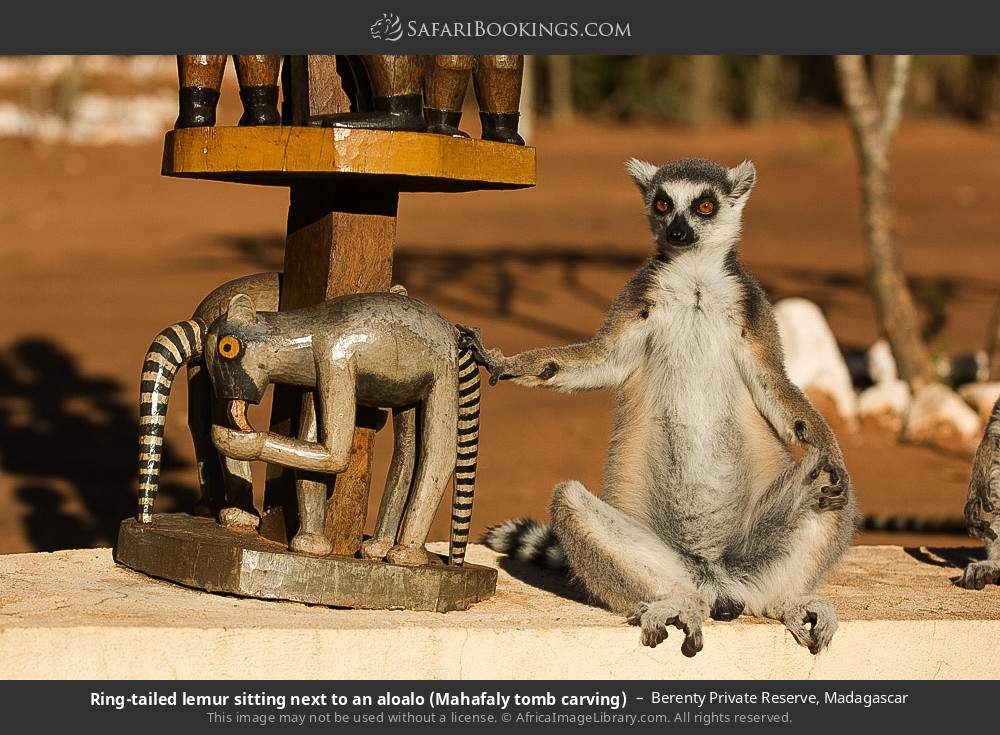 Ring-tailed lemur sitting next to an aloalo (Mahafaly tomb carving in Berenty Private Reserve, Madagascar