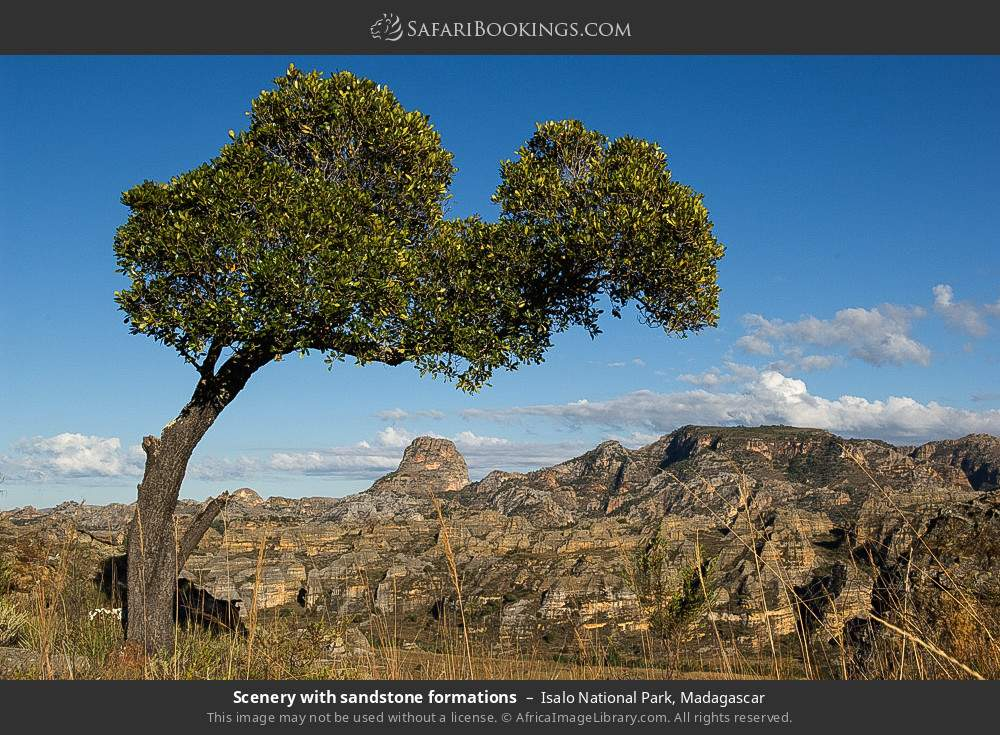 Scenery with sandstone formations in Isalo National Park, Madagascar