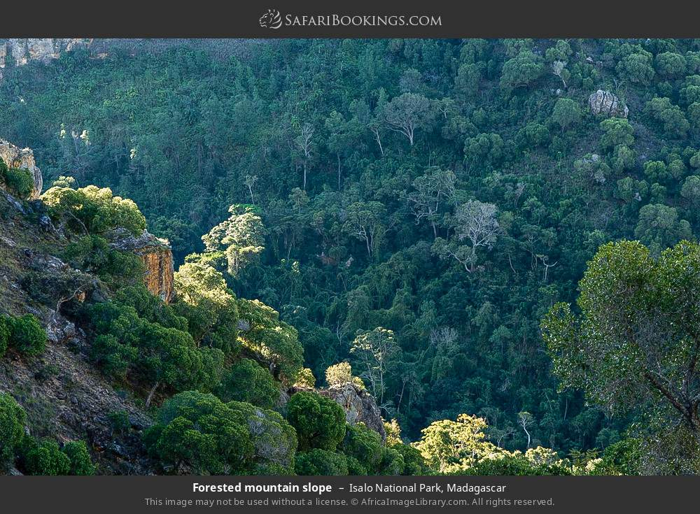 Forested mountain slope in Isalo National Park, Madagascar