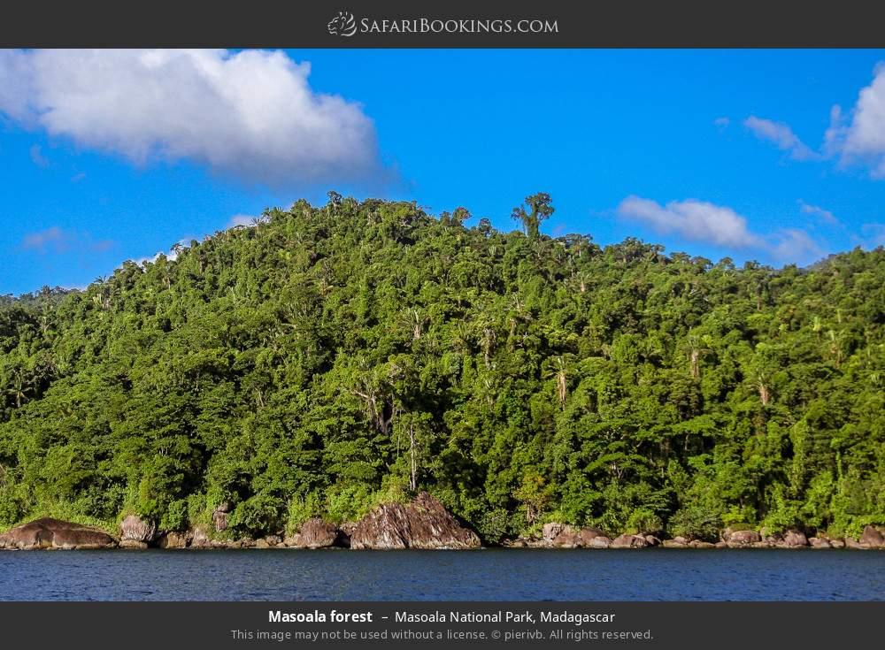 Masoala forest in Masoala National Park, Madagascar