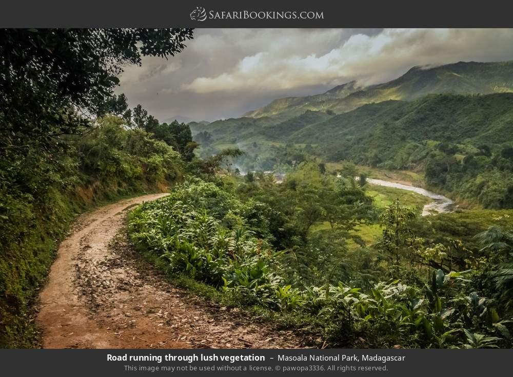 Road running through lush vegetation in Masoala National Park, Madagascar