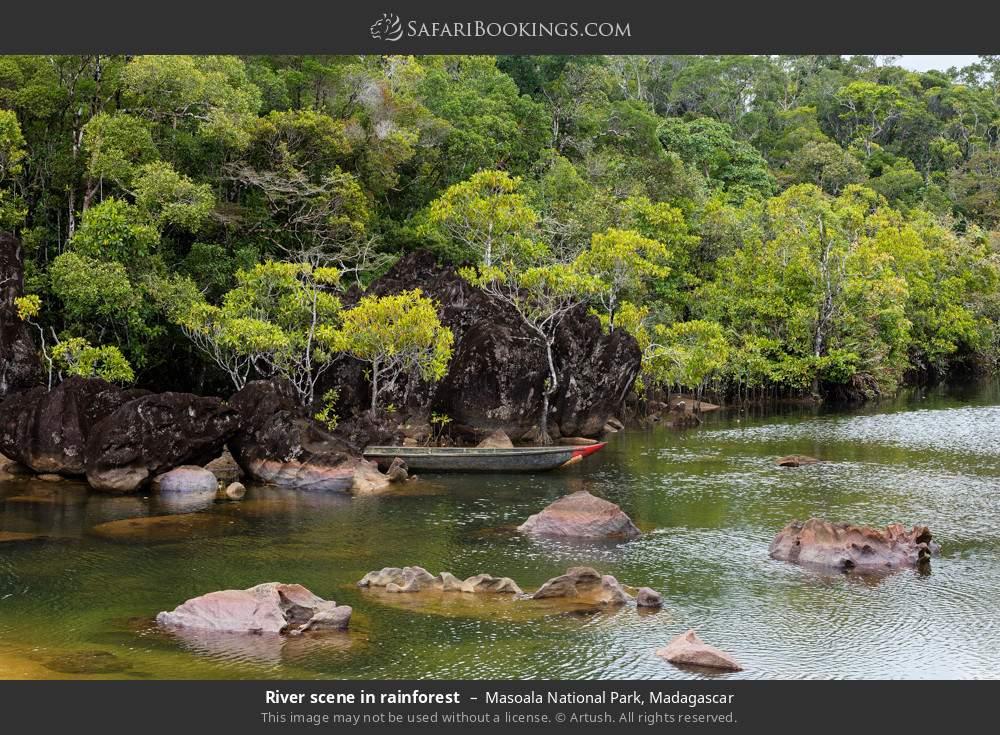 River scene in rainforest in Masoala National Park, Madagascar