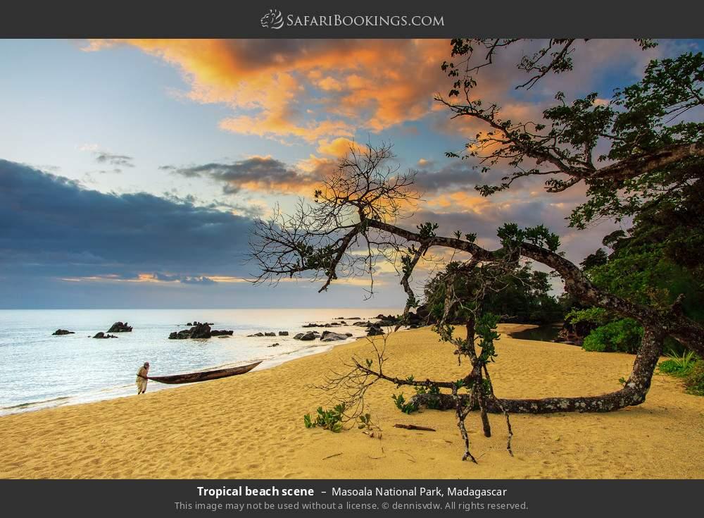 Tropical beach scene in Masoala National Park, Madagascar