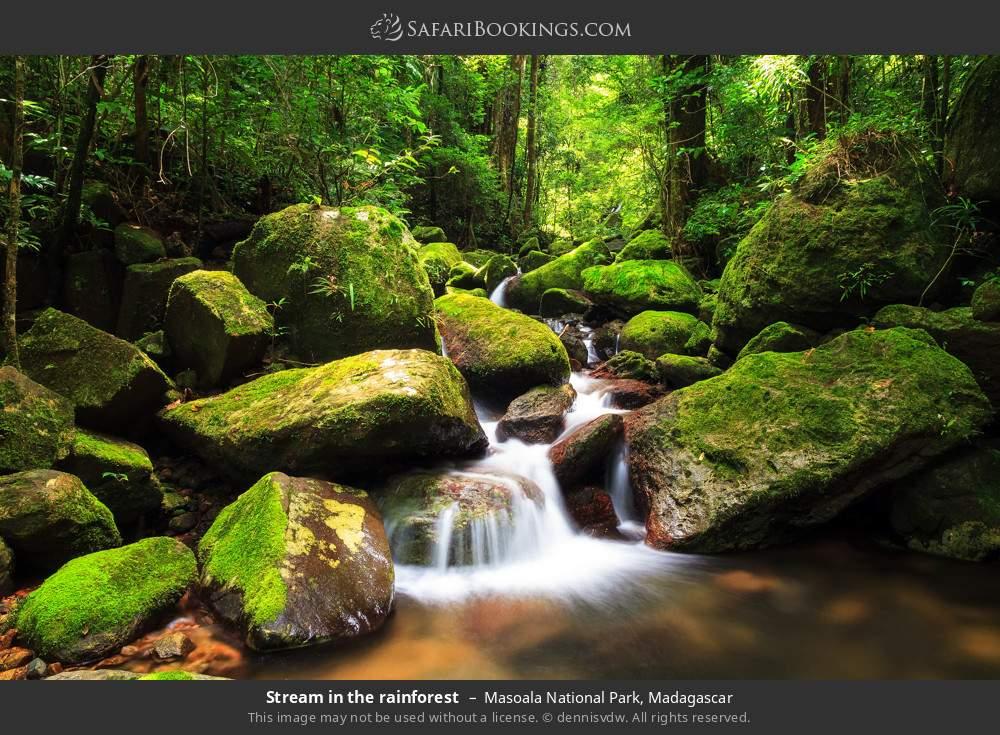 Stream in the rainforest in Masoala National Park, Madagascar