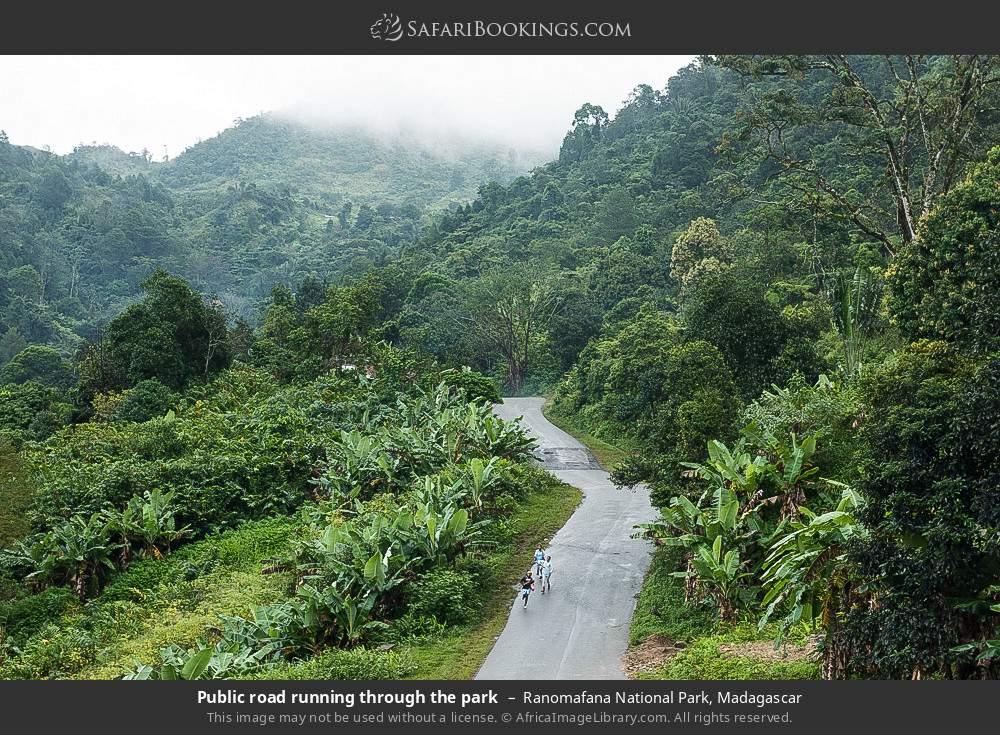 Public road running through the park in Ranomafana National Park, Madagascar