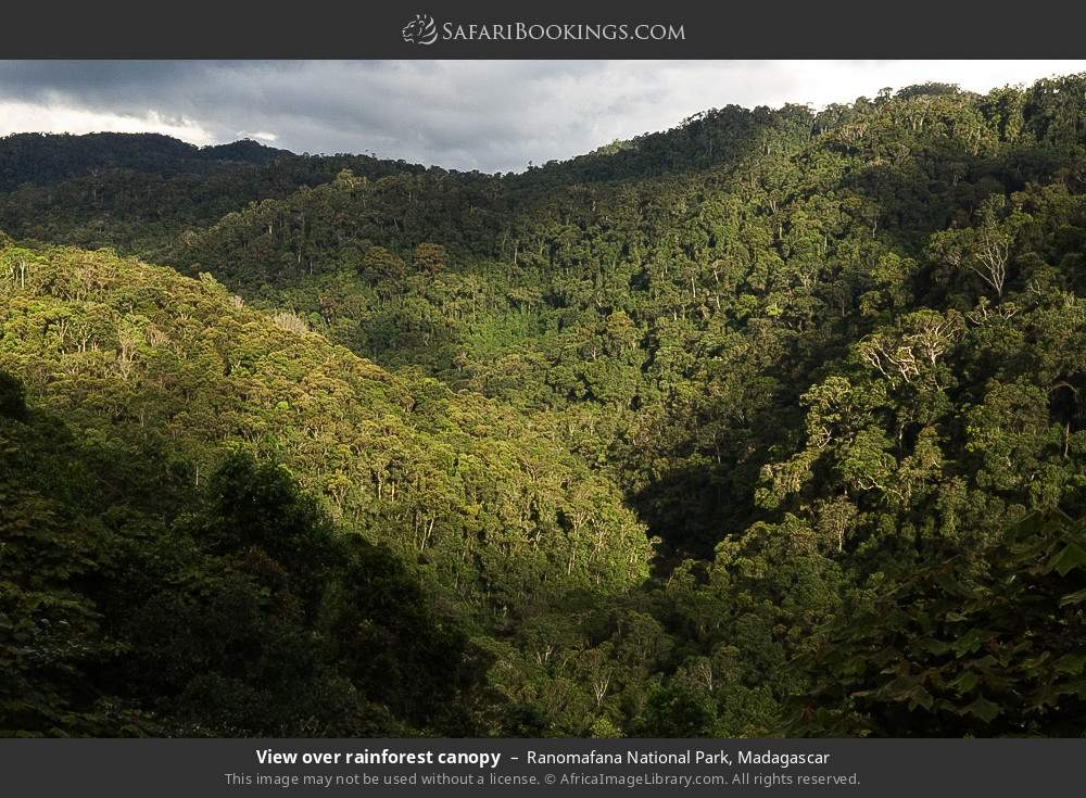 View over rainforest canopy in Ranomafana National Park, Madagascar