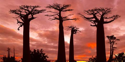 12-Day Madagascar off the Beaten Track