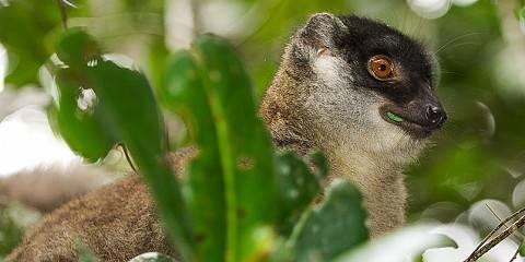 11-Day Madagascar Tour