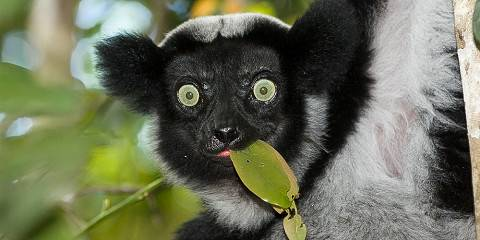 11-Day Lemurs & Sunsets: an Intro to Madagascar - Luxury