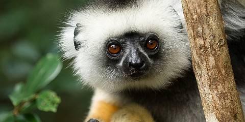20-Day Madagascar & Mauritius