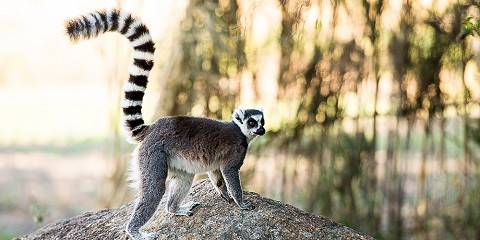 15-Day Forest and Island Exploration in Madagascar -Basic