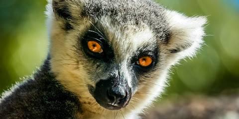 11-Day Lemurs & Sunsets: an Intro to Madagascar - Basic