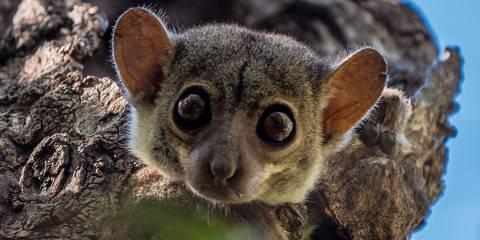 11-Day Madagascar Wildlife Safari - Lemurs & Chameleons