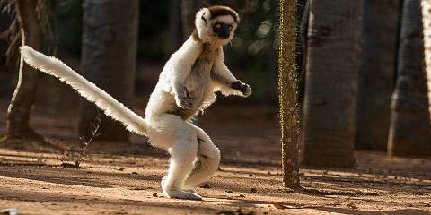 10-Day Adventure & Cultural Tour South & East Madagascar