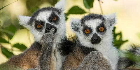 9-Day Wild Luxury Fly-in Madagascar- Ifotaka & Manafiafy