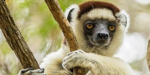 Madagascar Eastern Tour