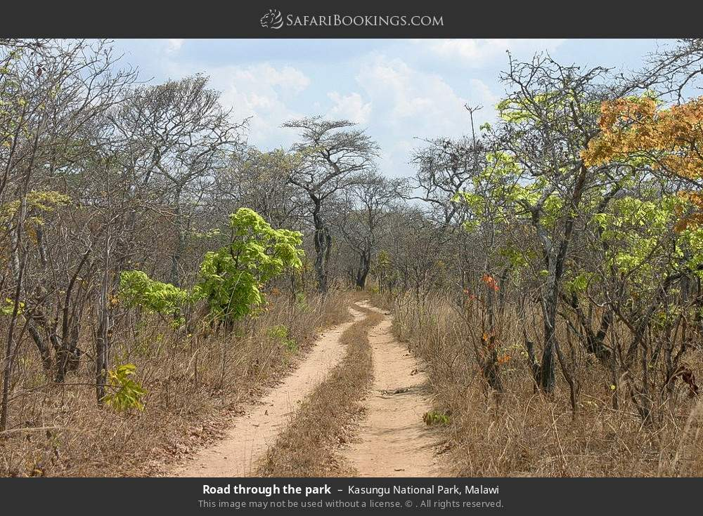 Road through the park in Kasungu National Park, Malawi