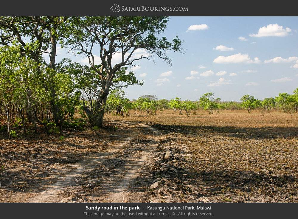 Sandy road in the park in Kasungu National Park, Malawi
