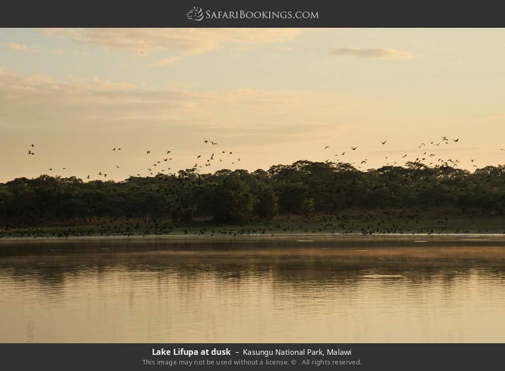 Lake Lifupa at dusk in Kasungu National Park, Malawi