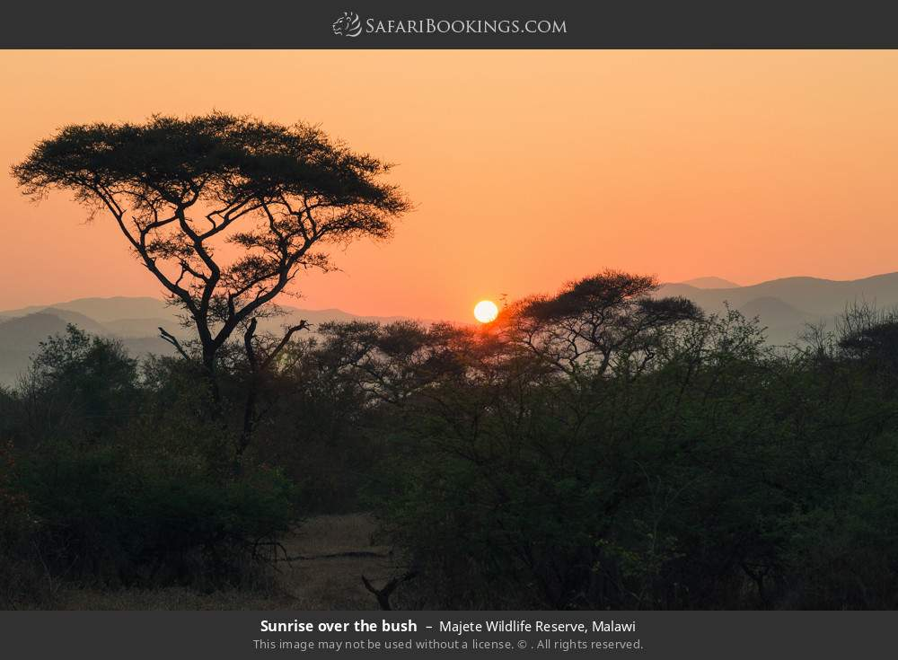 Sunrise over the bush in Majete Wildlife Reserve, Malawi