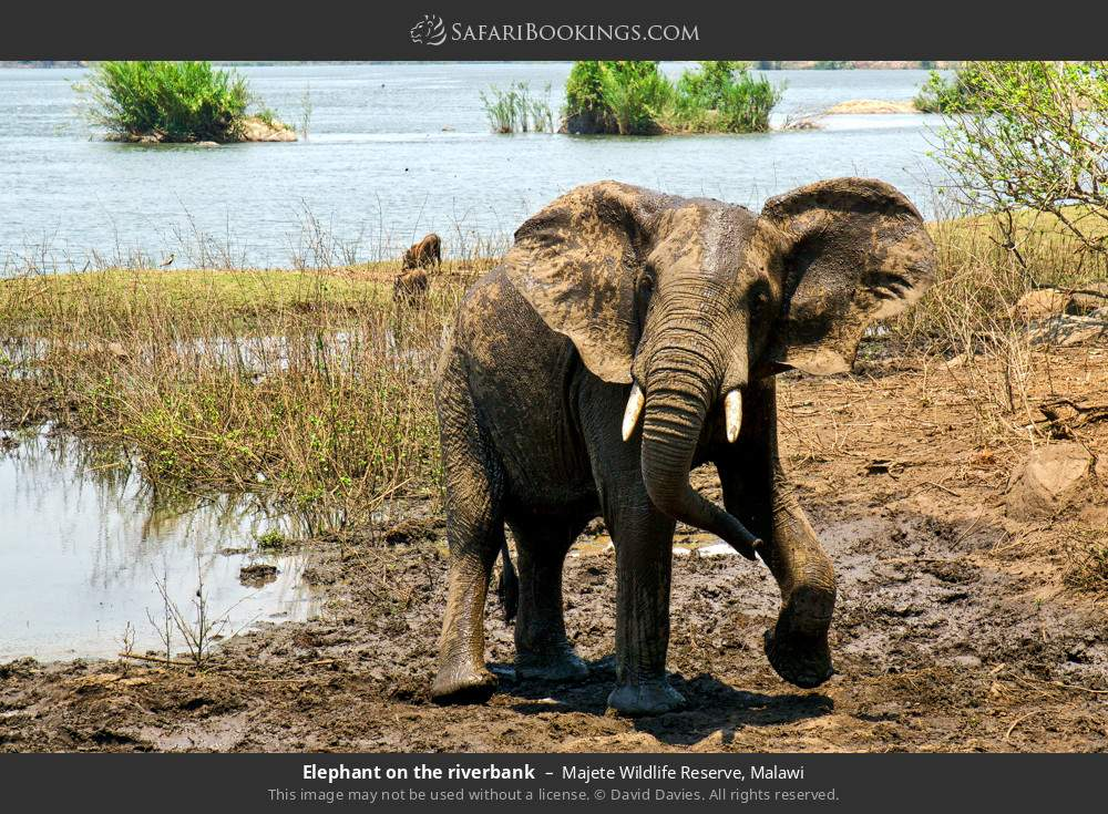 Elephant on the river bank in Majete Wildlife Reserve, Malawi