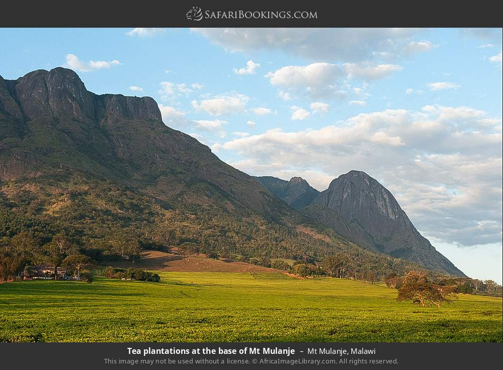 Tea plantations at the base of Mount Mulanje in Mount Mulanje, Malawi