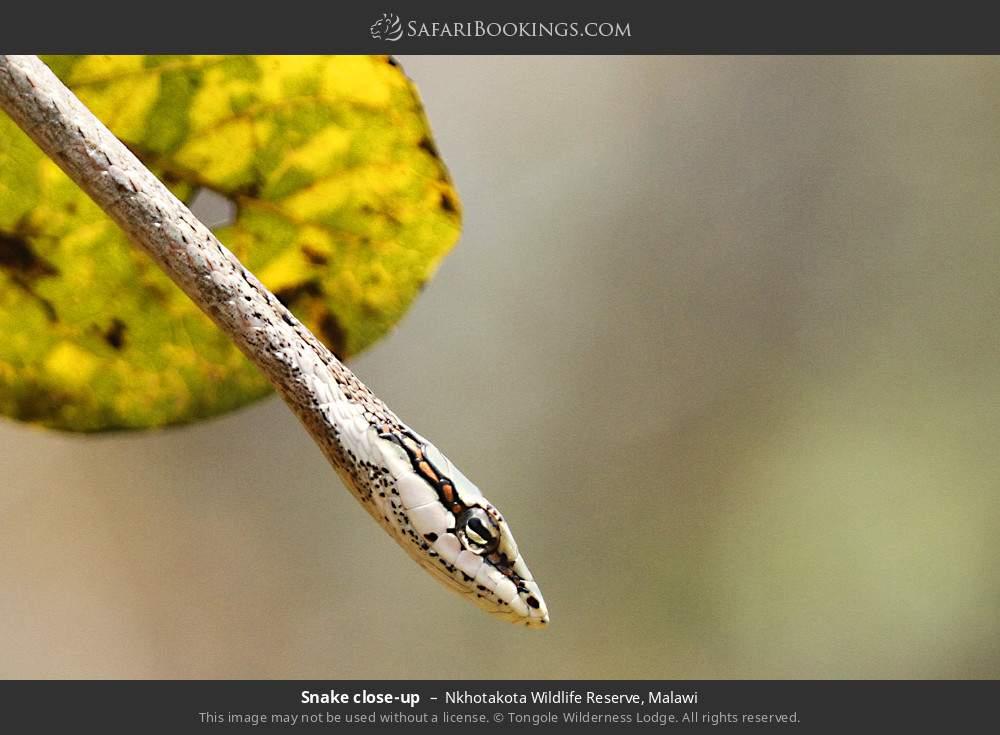 Snake close-up in Nkhotakota Wildlife Reserve, Malawi