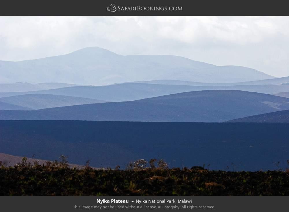 Nyika plateau in Nyika National Park, Malawi