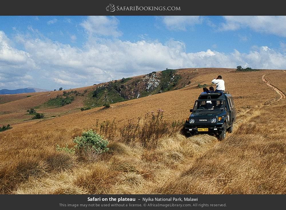 Safari on the plateau in Nyika National Park, Malawi